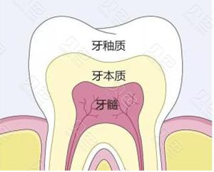 牙齿结构图